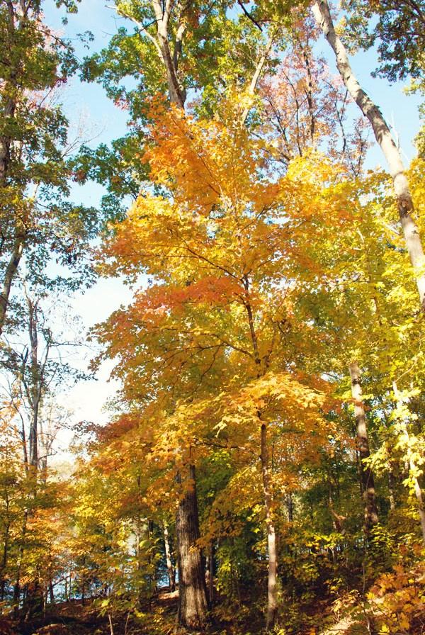 1021_fall-trees6