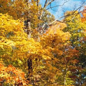 1021_fall-trees7