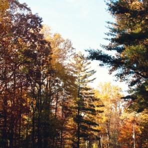 1023_trees3