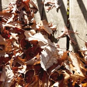 1113_leaves