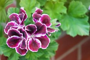 1115_flower3