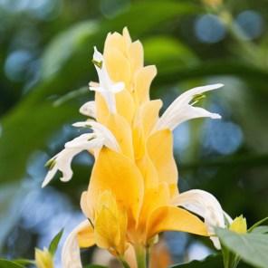 1115_flower7