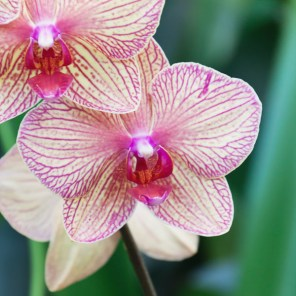 1115_orchid2