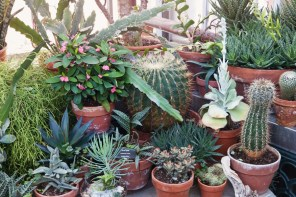 1115_succulents