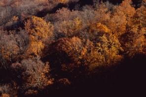 1116_trees