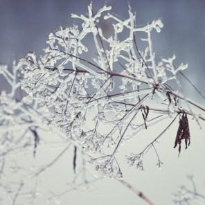 121_icicle2