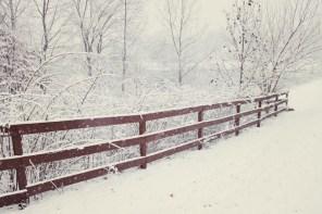 219_fence2