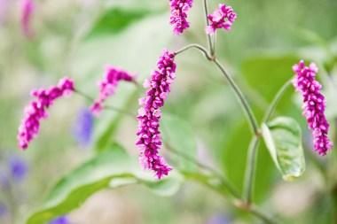 603_flowers5