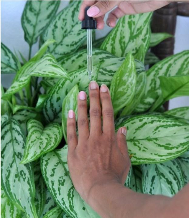 clear coat nail polish base