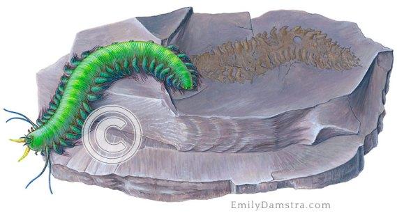 Devonian polychaete illustration Arkonips topororum