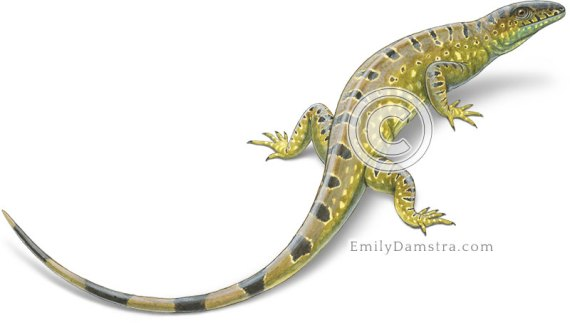 Late Carboniferous reptile illustration Hylonomus lyelli