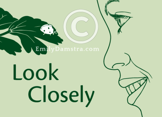 Look Closely illustration