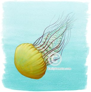 Pacific Sea Nettle – Emily S. Damstra