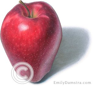 Red delicious apple – Emily S. Damstra