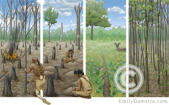 neutrals indigenous people illlustraion