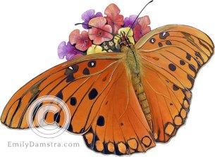 Illustration of Gulf fritillary butterfly on Lantana Agraulis vanillae on Lantana camara