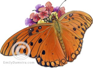 Illustration of Gulf fritillary butterfly on Lantana Agraulis vanillae on Lantana camara