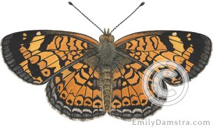 Pearl crescent – Emily S. Damstra
