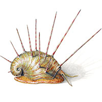 fossil illustrations paleoreconstructions