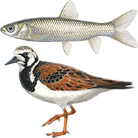 amphibian bird fish mammal reptile animal illustrations