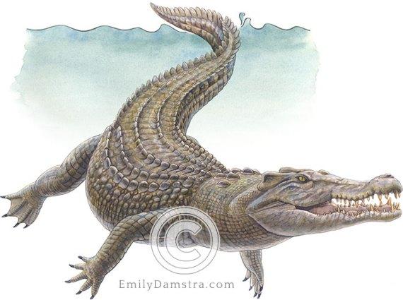 Saltwater crocodile illustration Crocodylus porosus