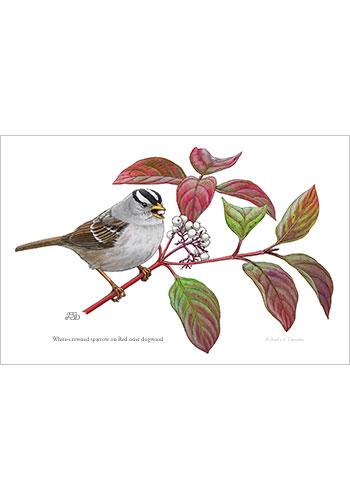 sparrow_dogwood_print