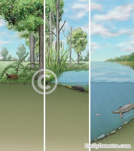 Turtle habitats illustration