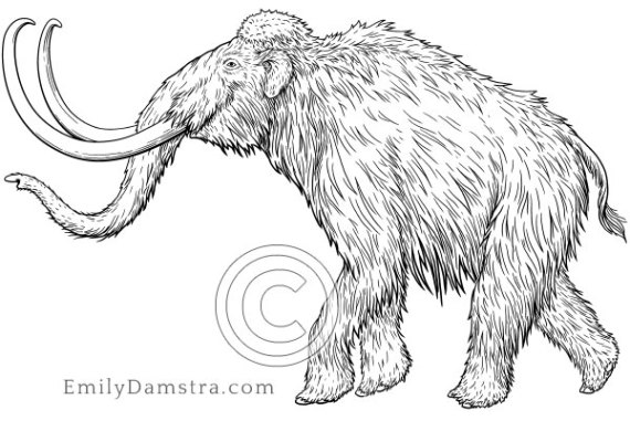 Illustration of a Woolly mammoth
