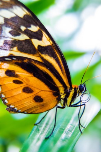 butterfly-7