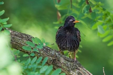 june2-bird