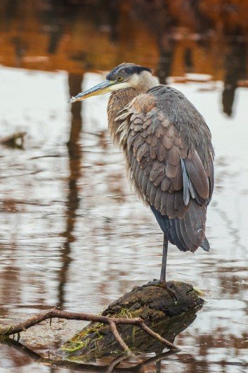 Dec24-Heron-10