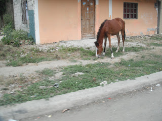 Horse in home yard