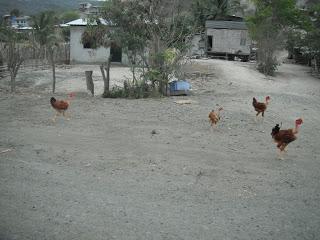 Birds in yard