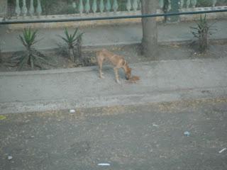 Dog on sidewalk eating food