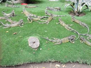 Iguana Park - Guayaquil, Ecuador