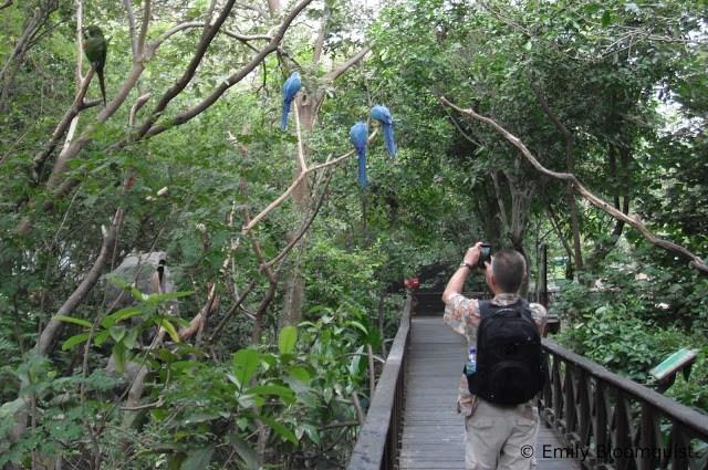 Walking among nature on raised walkways