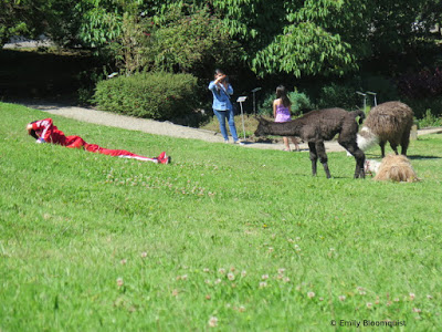 Young llama making new friend