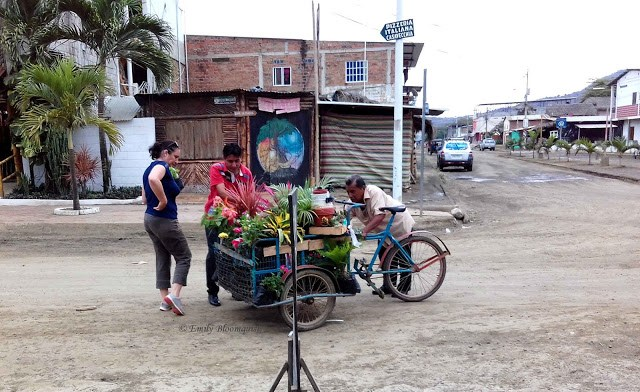 Plants for sale on tricycle