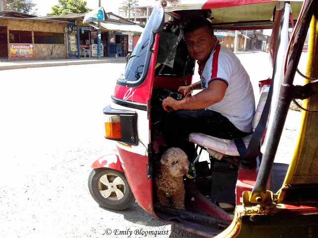 Dog riding in Puerto Lopez mototaxi