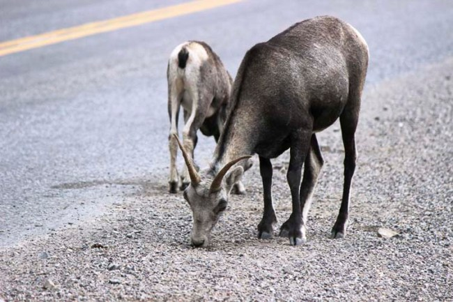 Alaska Travel AlCan Highway 16
