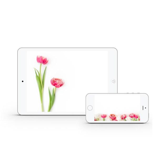 Pink Tulips Styled Stock Bundle | Emily Moore | www.emilymoorephoto.com
