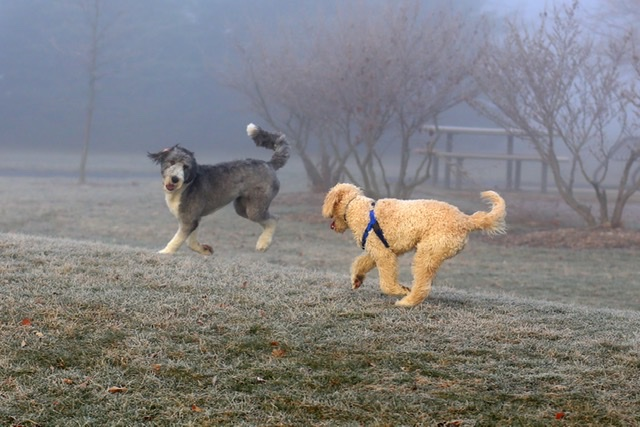 Dogs in the fog, Day 12