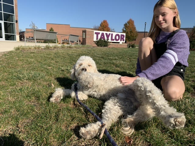 Emotional Support Dog goes to college