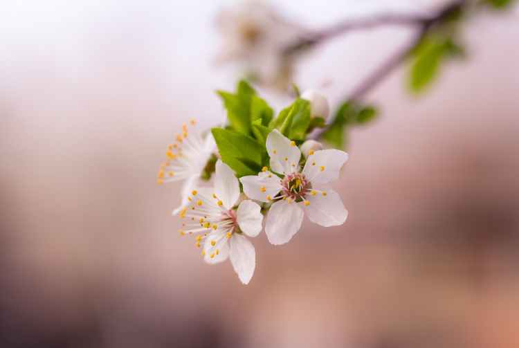 selective focus photograph of white petaled flower