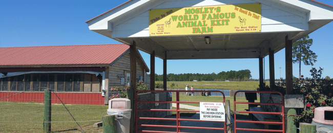 Roadside Attraction: Petting Farm at a Gas Station in Georgia
