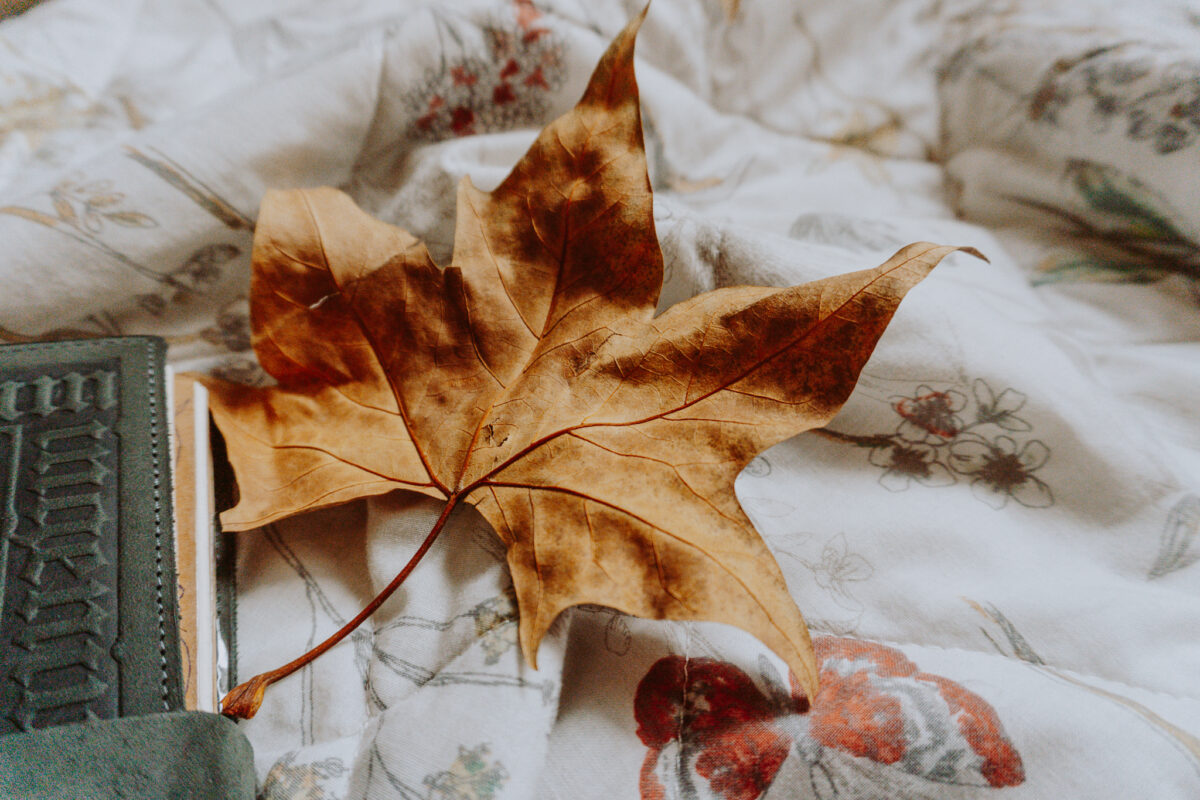 An Autumn Leaf and my Book of Shadows.