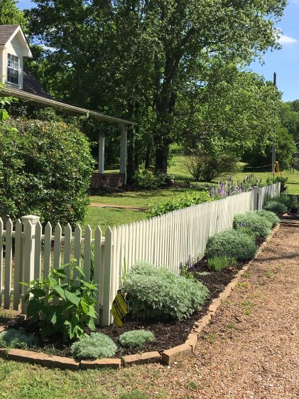 The picket fence has a new look with Artemisia as the anchoring plants.