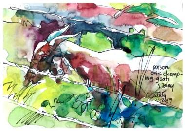 "watercolor, pen on paper   6"" x 8"""