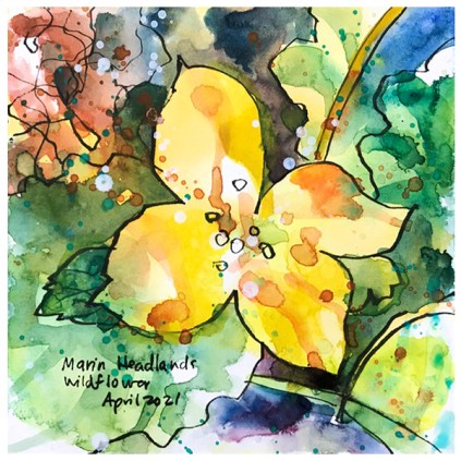 watercolor painting of california wildflowers by emily weil