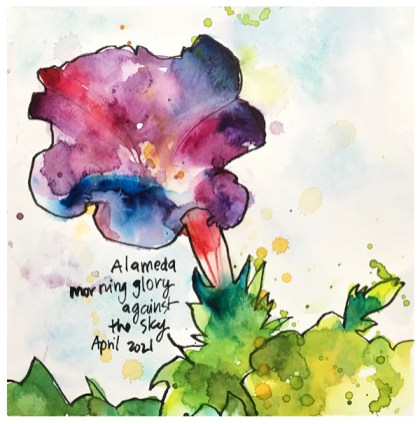 watercolor painting of morning glory by emily weil